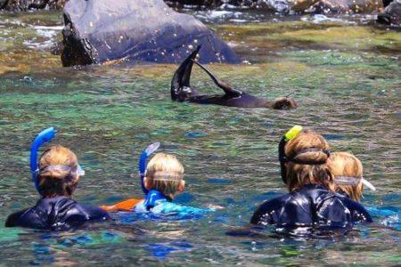 kangaroo island seal, dolphin swim snorkel