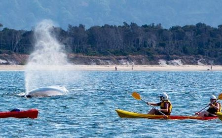 sea-kayak-tours-byron-bay