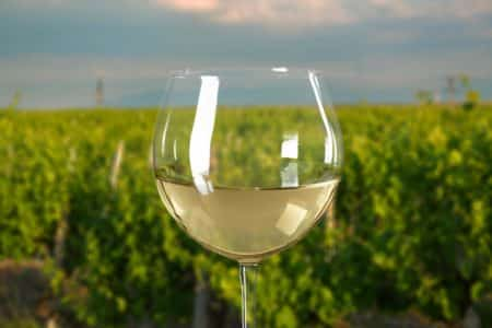 single_glass_with_vineyard_background_lg