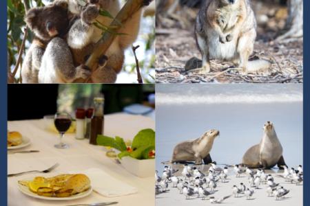 Luxury 'Island Life' Full Day Landscape & Wildlife Tour