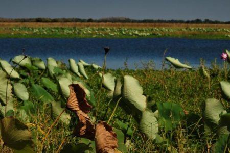 Mikinj Valley (Red Lily) Arnhem Land