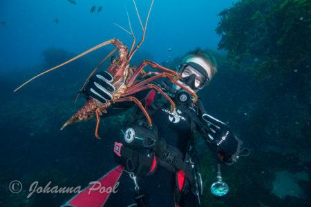 Rottnest Island Dive or Snorkel