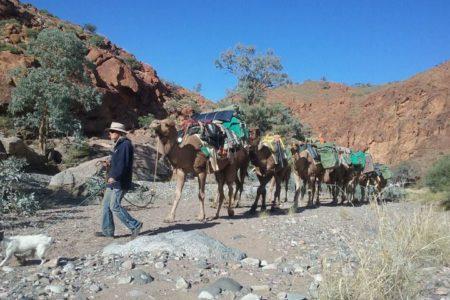 camel_train_with_rocks_lg