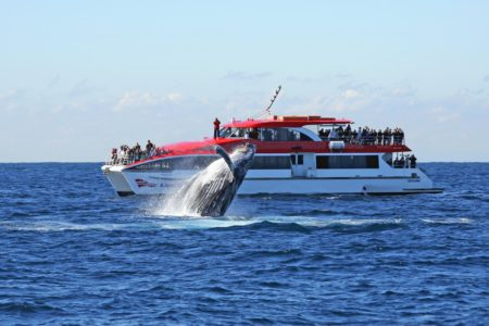 Sydney Whale Watching Afternoon